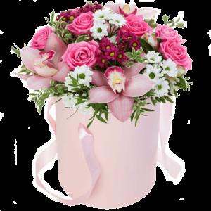 Trandafiri C117